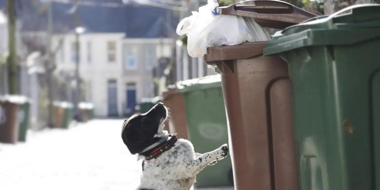 stop dog trash garbage