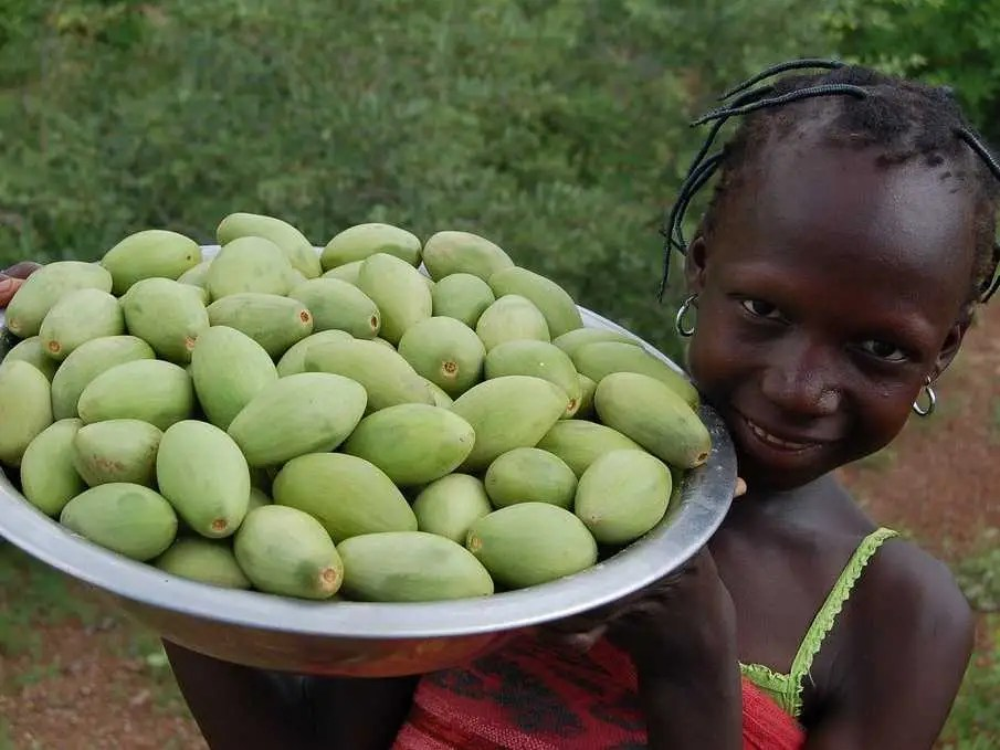 Shea Butter Africas Markets  Business Insider