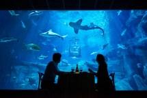 Airbnb Underwater Bedroom - Aquarium De Paris Business