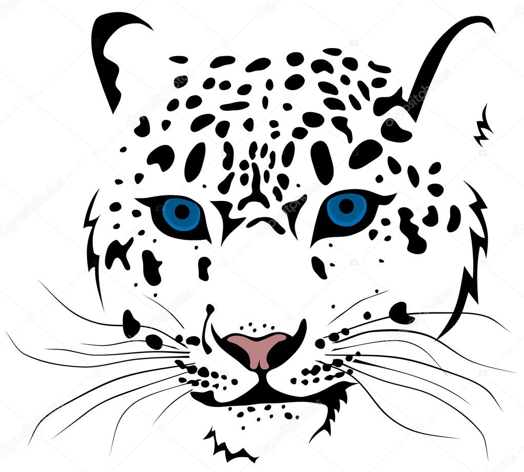 Snow leopard — Stock Vector © oorka5 #5162226