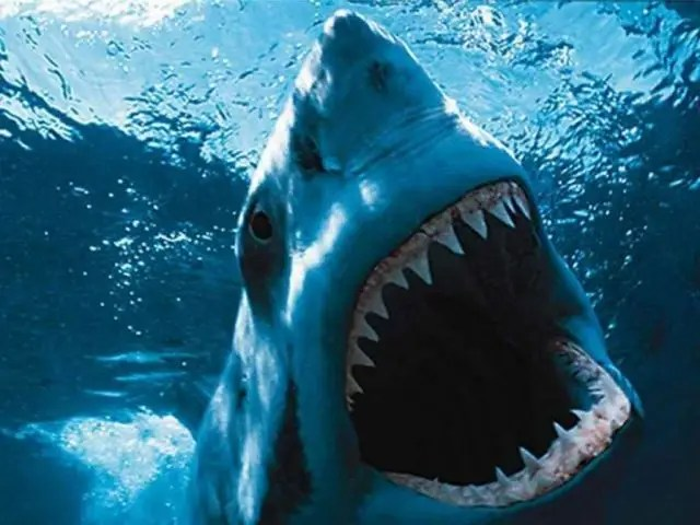 25 Awesome Things You Should Know For Shark Week