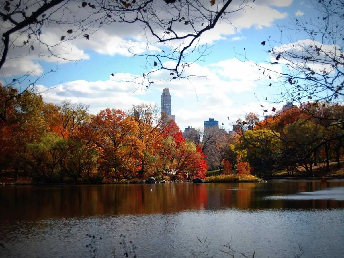 4k Central Park In The Fall Wallpaper What To Do In Nyc This Fall Business Insider