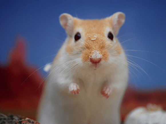 'If you were a gerbil, which kind of gerbil would you be?' —Airbnb Software Engineer job candidate