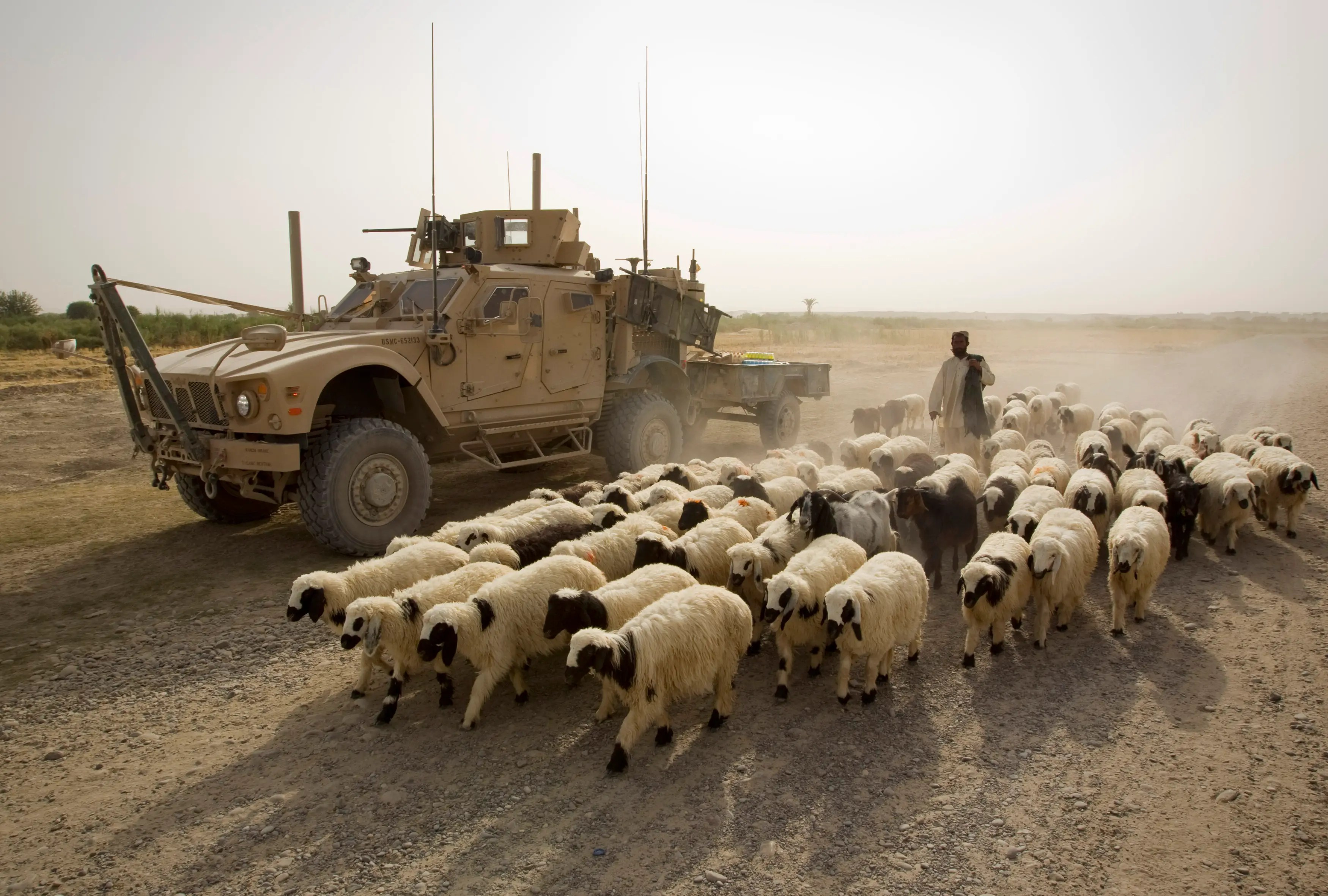 An Afghan shepherd walks with a flock of sheep past a US Marines armored vehicle outside the Camp Gorgak in Helmand province, southern Afghanistan, July 5, 2011.