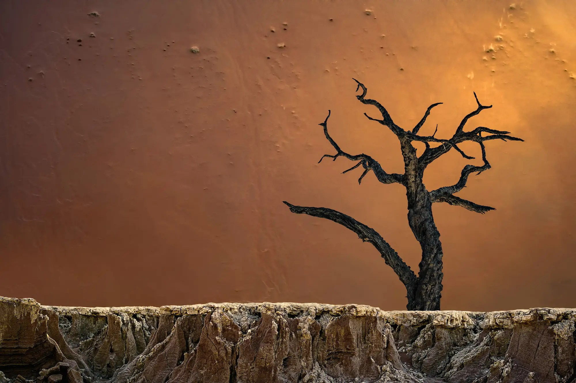 "And the contrast in texture here in this other shot from Deadvlei, Sossusvlei, Namibia, is fascinating. A fourth image from the third-place winner of the ""Photographer of the Year"" contest."