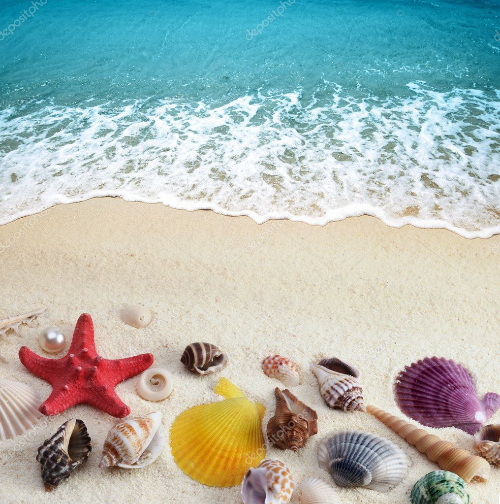Ocean Sand Shells
