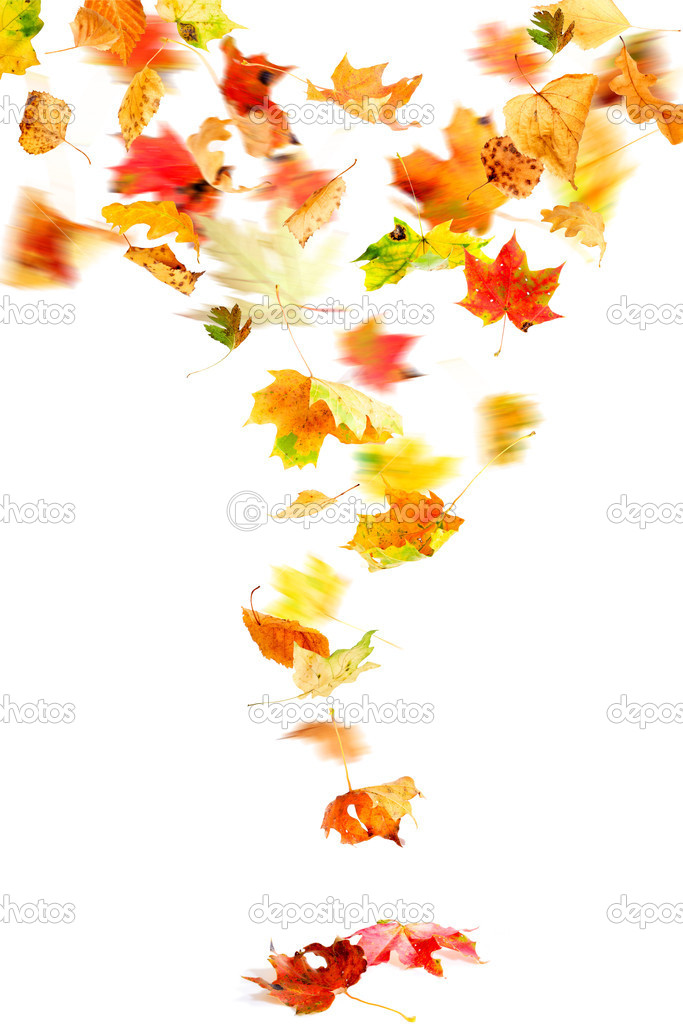 Tree With Leaves Falling Wallpaper Fallende Herbstbl 228 Tter Stockfoto 169 Dibrova 6634722