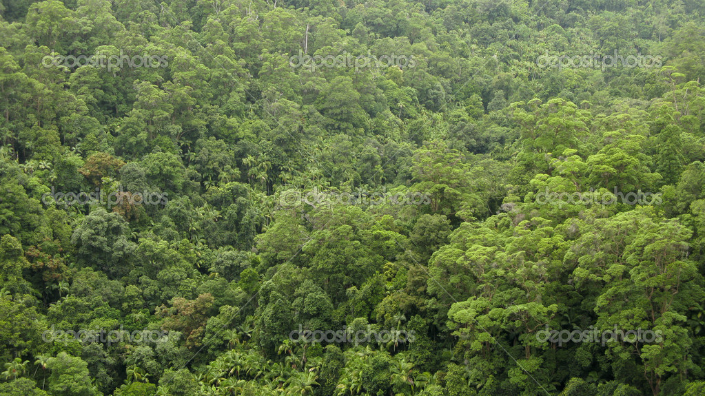 Between 2015 and 2020, south america lost almost 3 million. Rain Forest Canopy Seen From Above Stock Photo By C Arrxxx 5917684