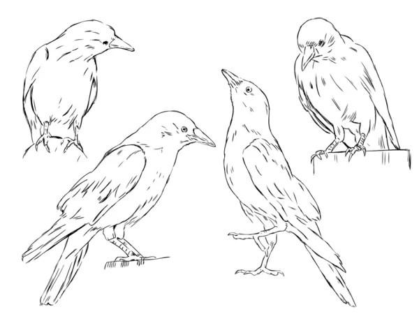 Raven Wiring Schematics