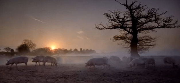 This television commercial for Tesco Sausage, featuring pigs roaming in a field, was banned in September 2011 for being misleading—pigs for Tesco are bred both indoors and outdoors. Tesco responded that the ban was ridiculous considering that the farm featured was  Tesco supplier.
