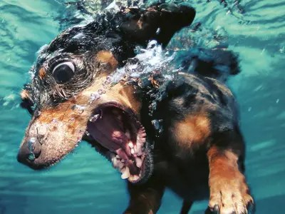 underwater dog seth casteel