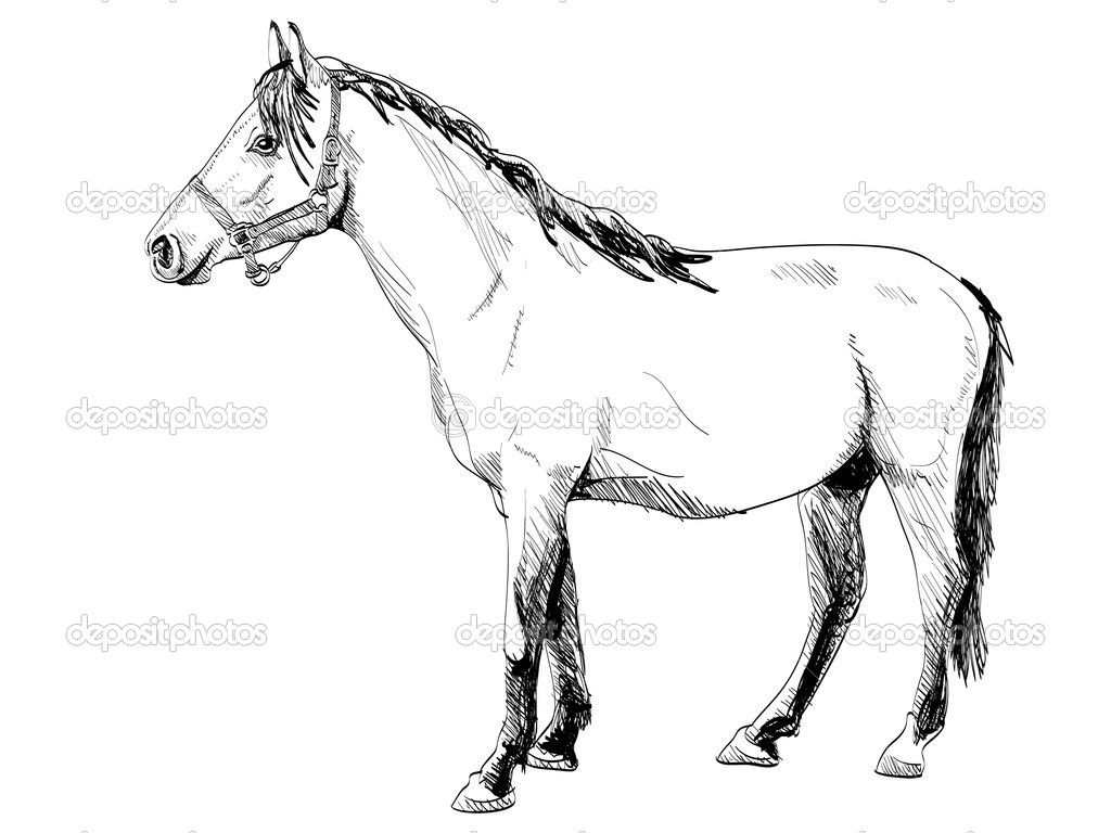 Pictures Simple Horse Outlines