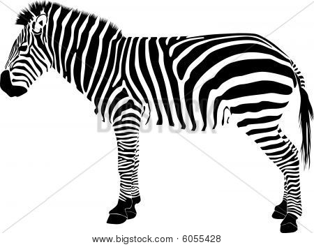 Picture or Photo of Zebra tattoo silhouette vector zoo