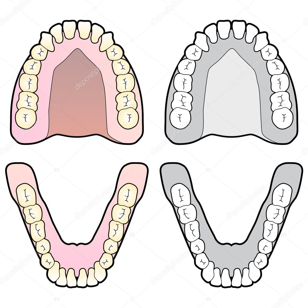 Tooth Dental Chart