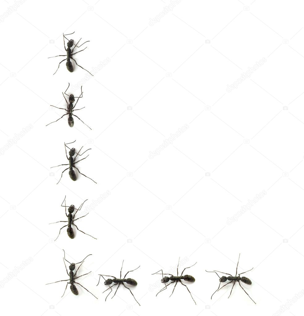 A line of worker ants marching to alphabet letters