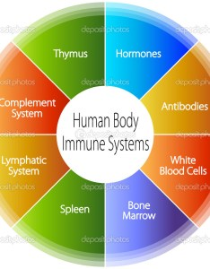 An image of  human body immune systems chart  vector by cteconsulting also stock rh depositphotos