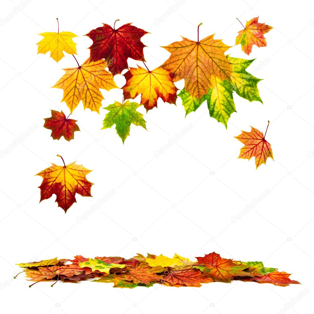 Autumn Falling Leaves Live Wallpaper Colorful Autumn Leaves Falling Down Stock Photo