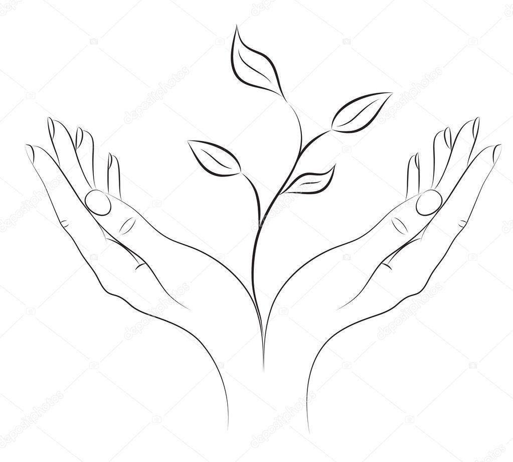 Pianta giovane in mani femminili — Vettoriali Stock