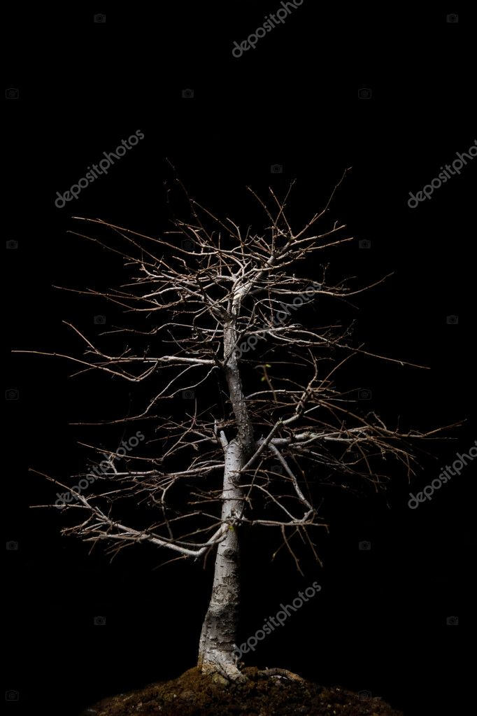 https depositphotos com 11288605 stock photo bonsai with overhead lighting html