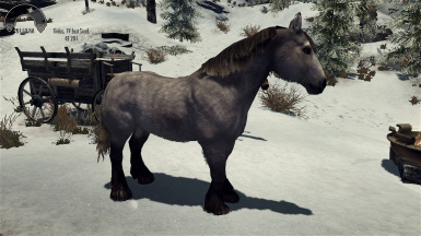 realistic horse breeds # 1