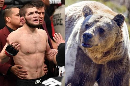 When the adult Khabib Nurmagomedov wrestled with the bear again