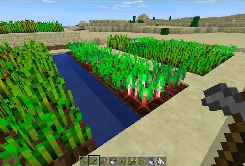 Beetroots can be found in multiple places in Minecraft (Image via Minecraft)
