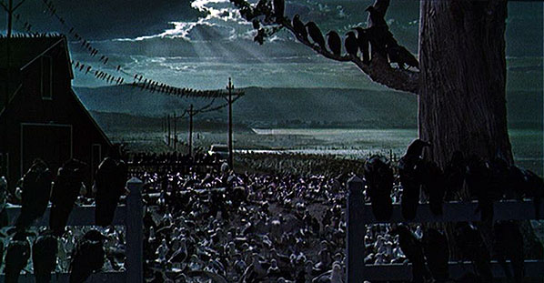 The Birds (1963), dir. Alfred Hitchcock