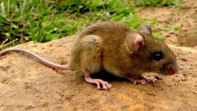 Hantavirus has instantly become a trend on social media