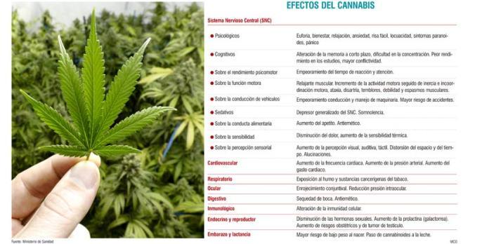 Efectos del cannabis