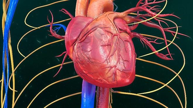 Imagen cardiaca.