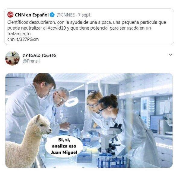 La alpaca fue clave