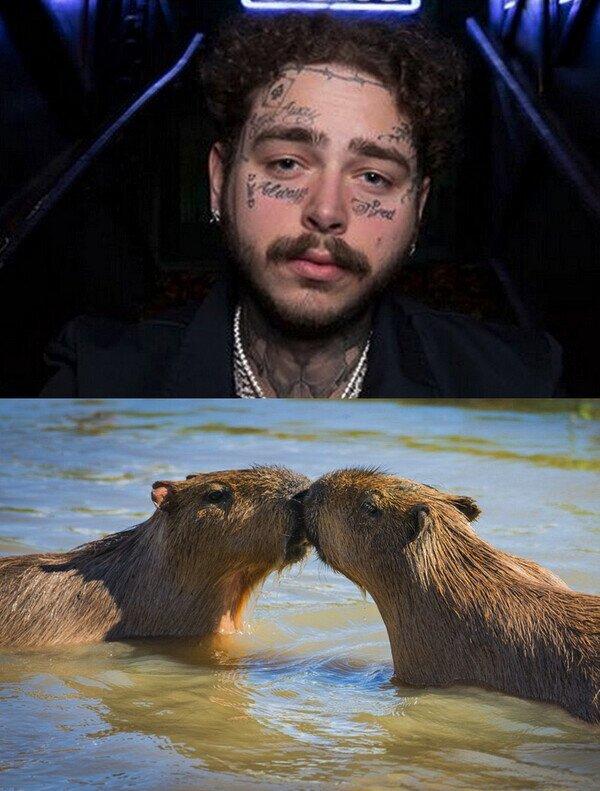 ¿Por qué el bigote de Post Malone parecen dos capibaras besándose?