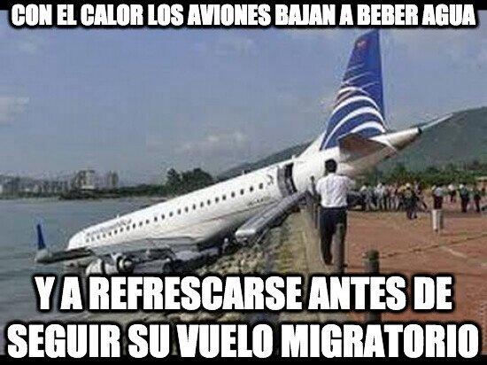Con el calor los aviones bajan a beber agua y a refrescarse antes de seguir su vuelo migratorio