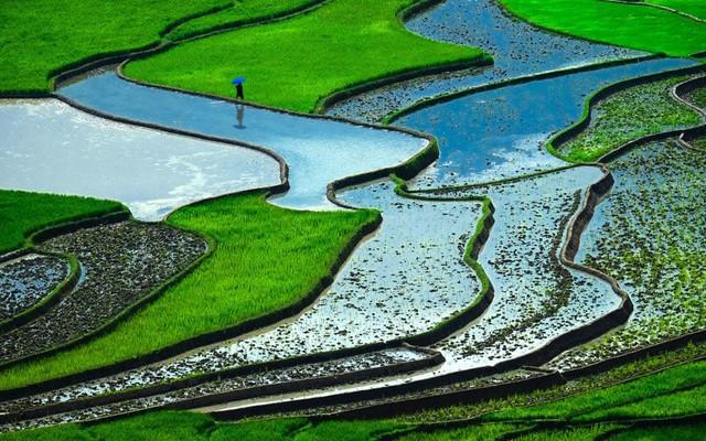 Ruộng bậc thang ở Việt Nam trong top cảnh quan đẹp nhất - Ảnh 8.