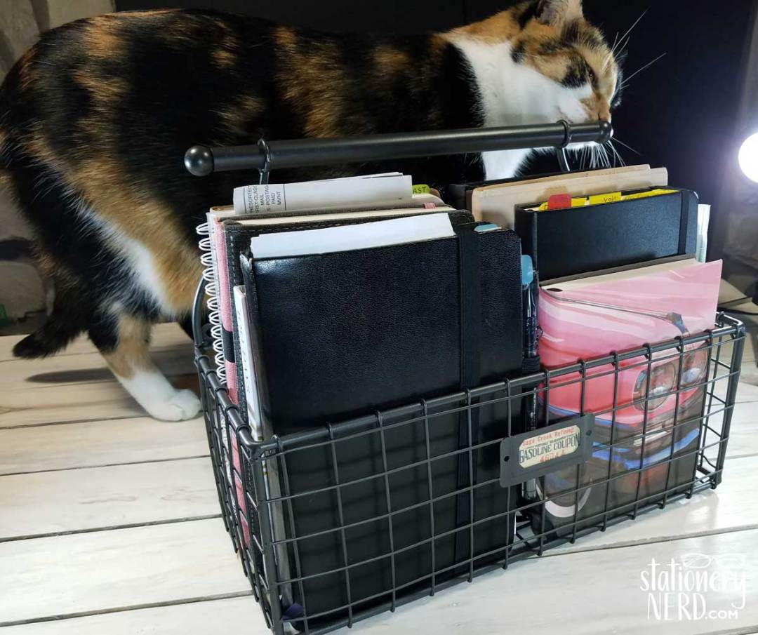 Cat investigating basket of journals