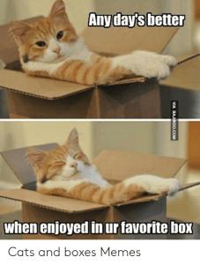 Meme of a cat enjoying a cardboard box.