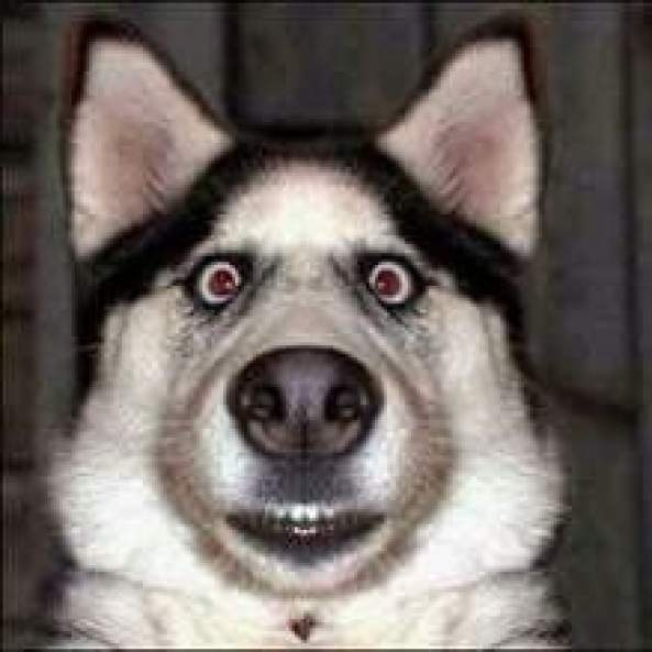 Funny Dog Whatsapp PIcs