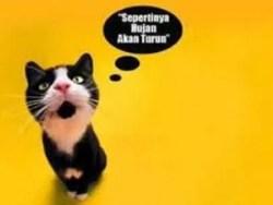 Gambar gokil kucing bicara