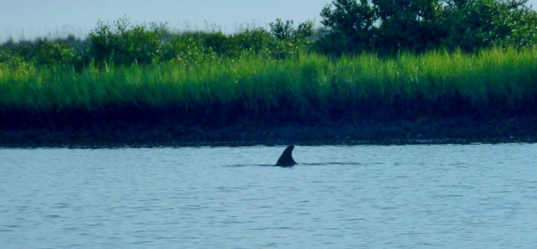 Dolphin Encounter, St, Augustine, kayak,Tours