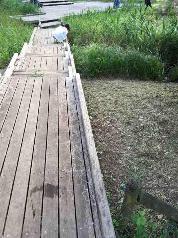 忠生公園 湿地帯3
