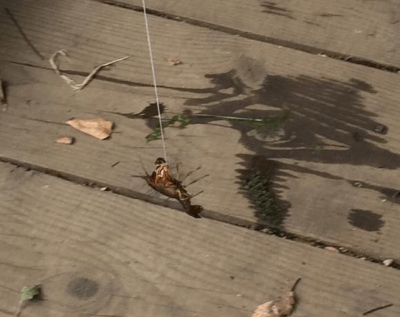 忠生公園 水の広場3