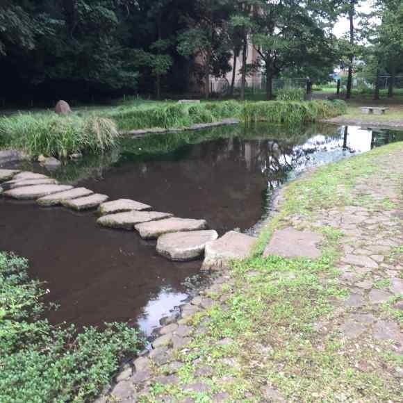 忠生公園 がにやら池1