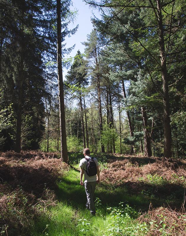 Man walking in tall trees