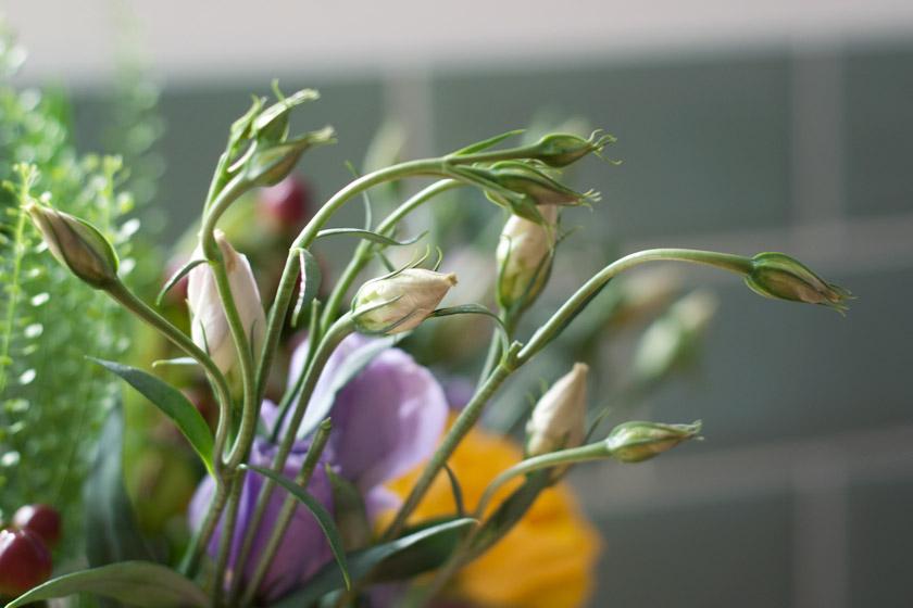 Wispy flower buds