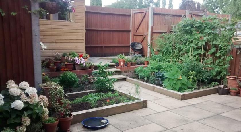 Raised beds in back garden