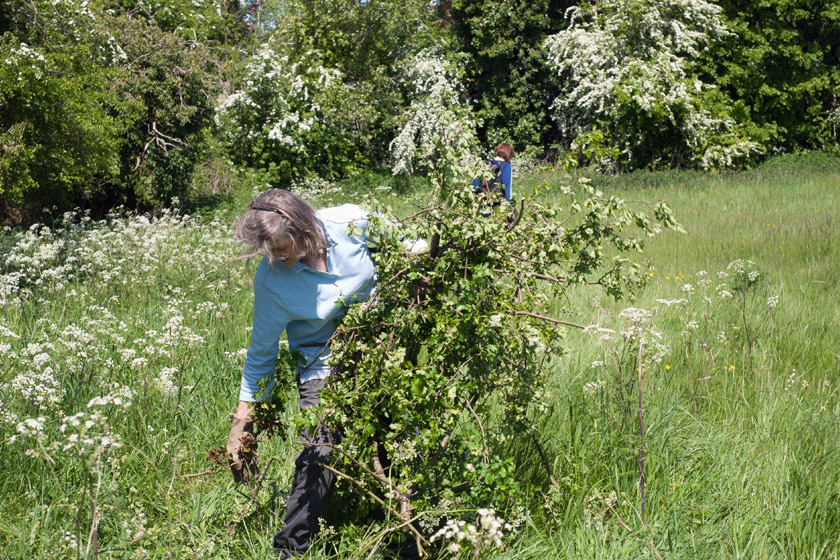 Volunteer with tree cuttings