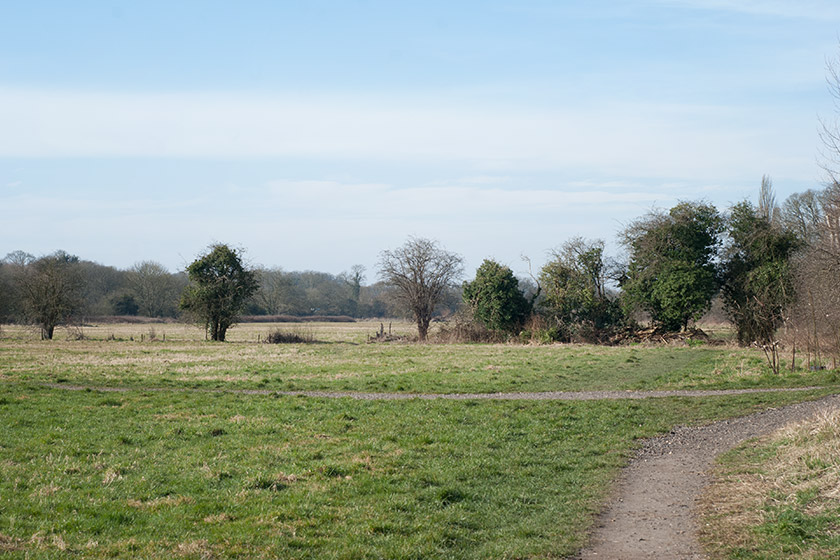 Open space at Bishop's Meadow