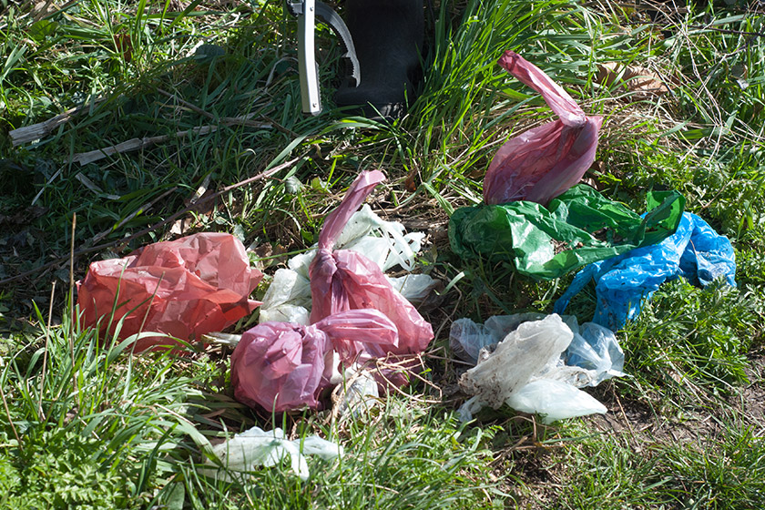Old bags of dog waste
