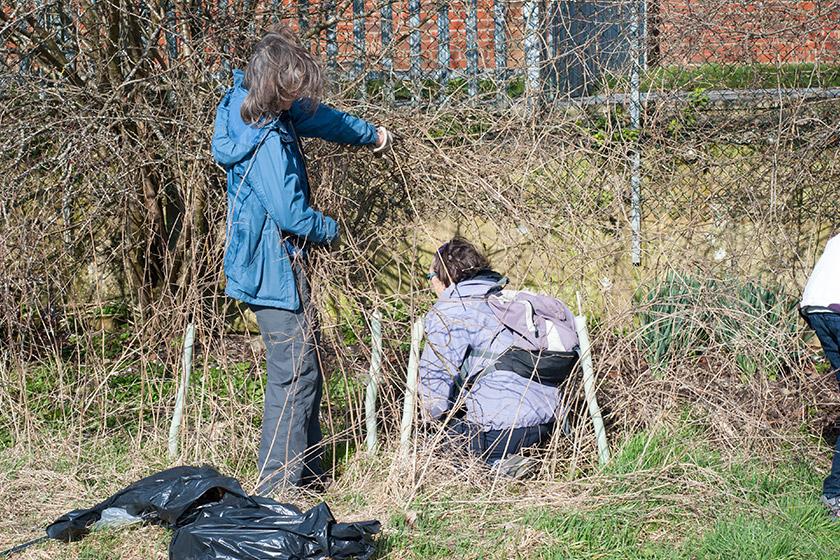 Litter picking in bushes
