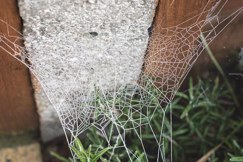 Cobweb over post
